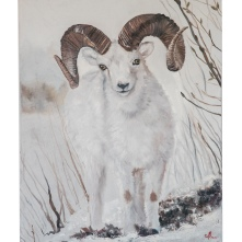 Dall sheep, oil on canvas, 100*80cm